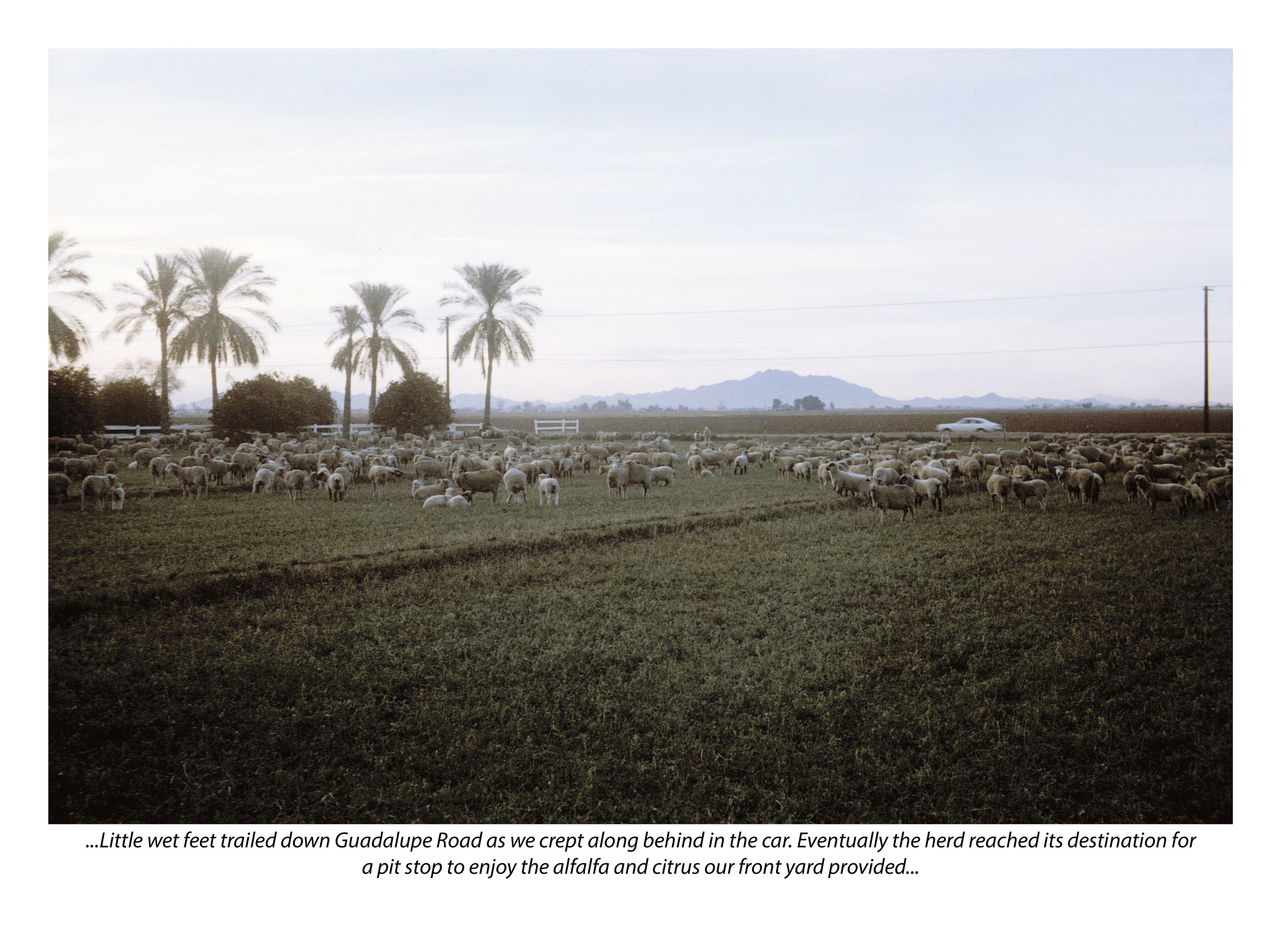 Herd (with photograph by Marvin Morrison)   Pigmented Inkjet Print with Text © 2013, Gina DeGideo