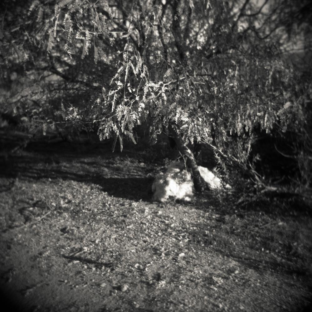 03/17 – Under the Mesquite Tree   Gelatin Silver Print on Ilford Warmtone Fiber Paper © 2014,Gina DeGideo