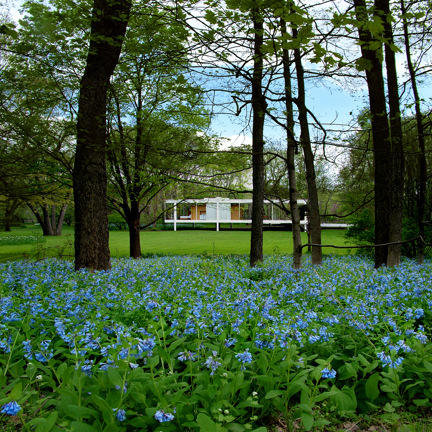 "Farnsworth House Bluebells No. 2, 2008  36"" x 36"""