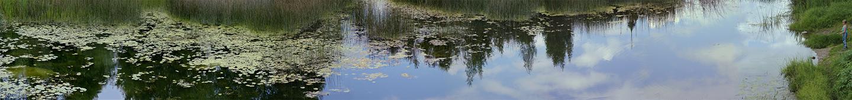 """Kashinka River No. 1, 2004  15"""" x 96"""""""