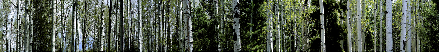 "Coconino National Forest, 2002   15"" x 96"""