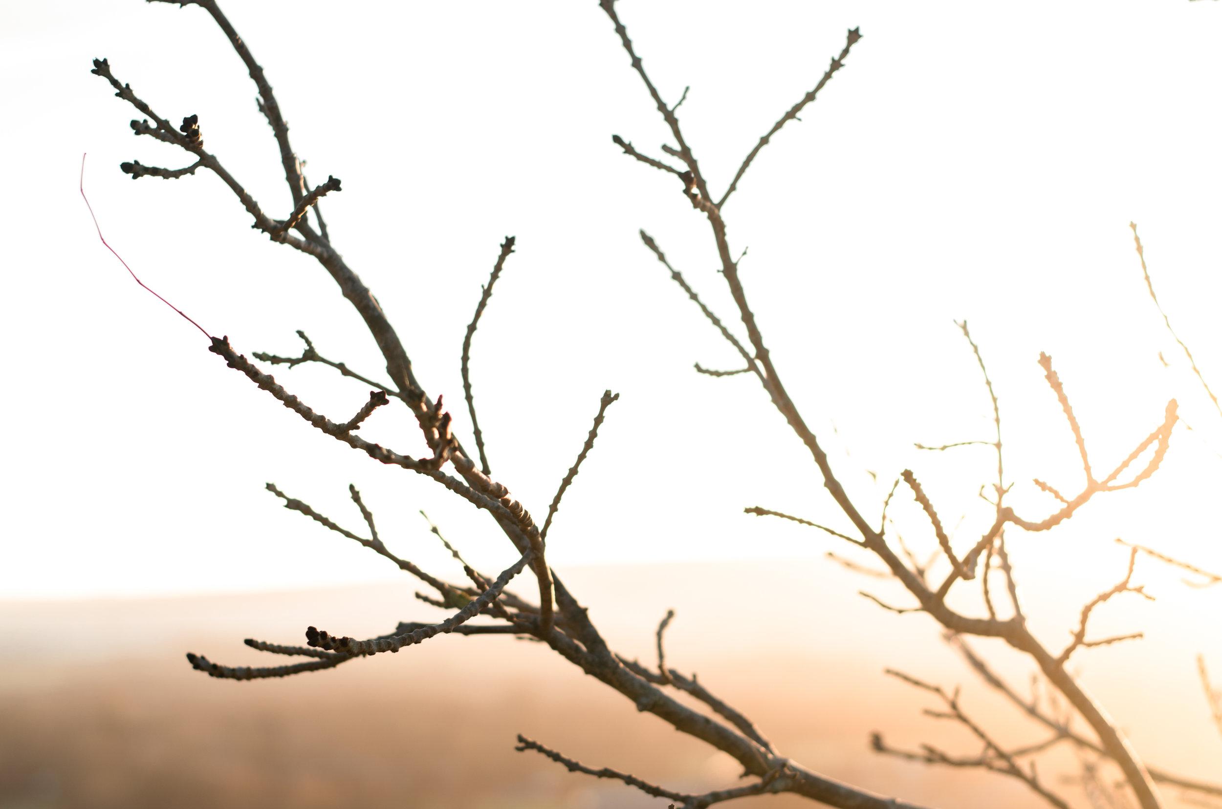 Winter Walk- Aiste Saulyte Photography - 2018-01-05-37.jpg