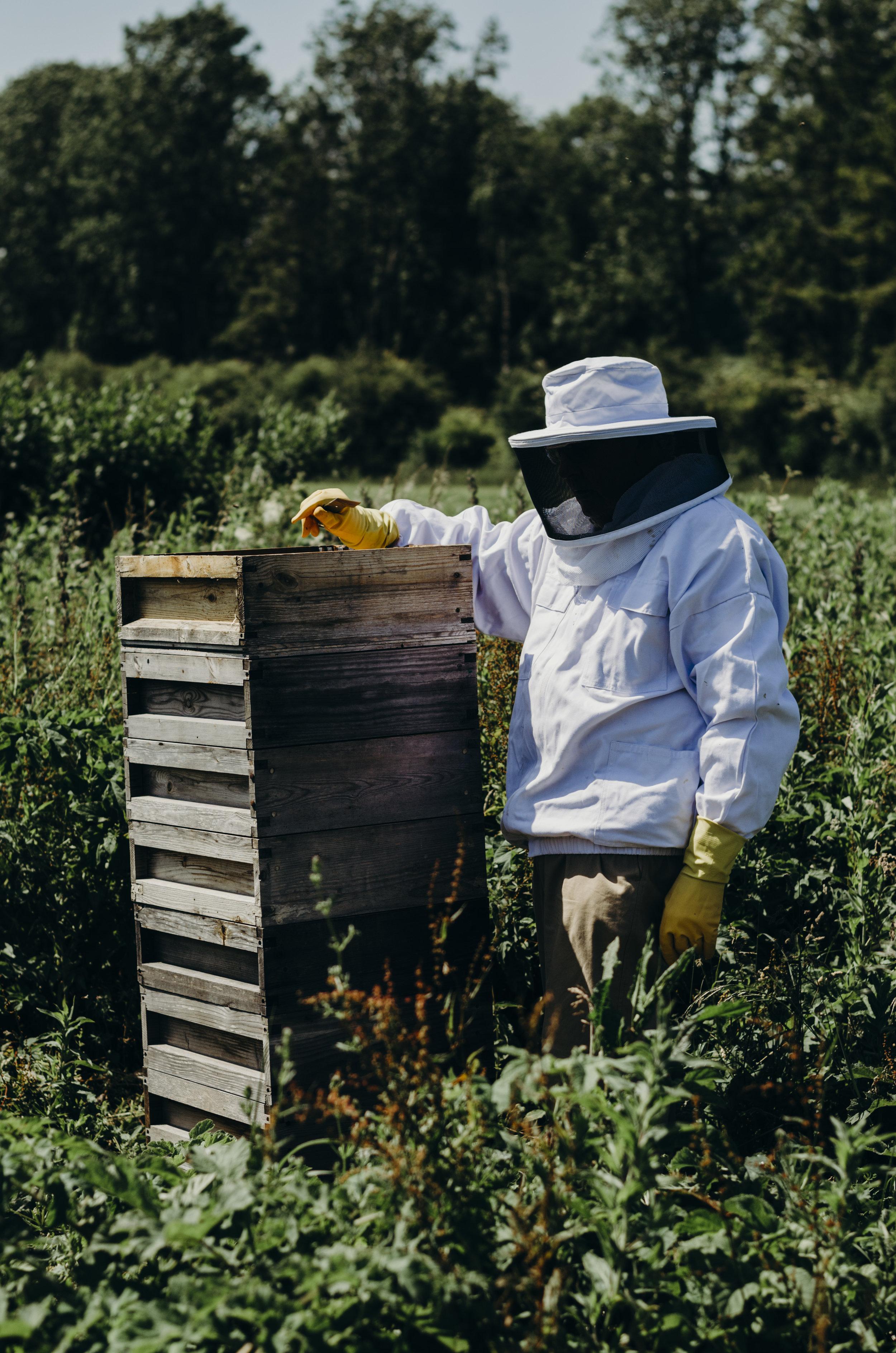Beekeeping_25.JPG