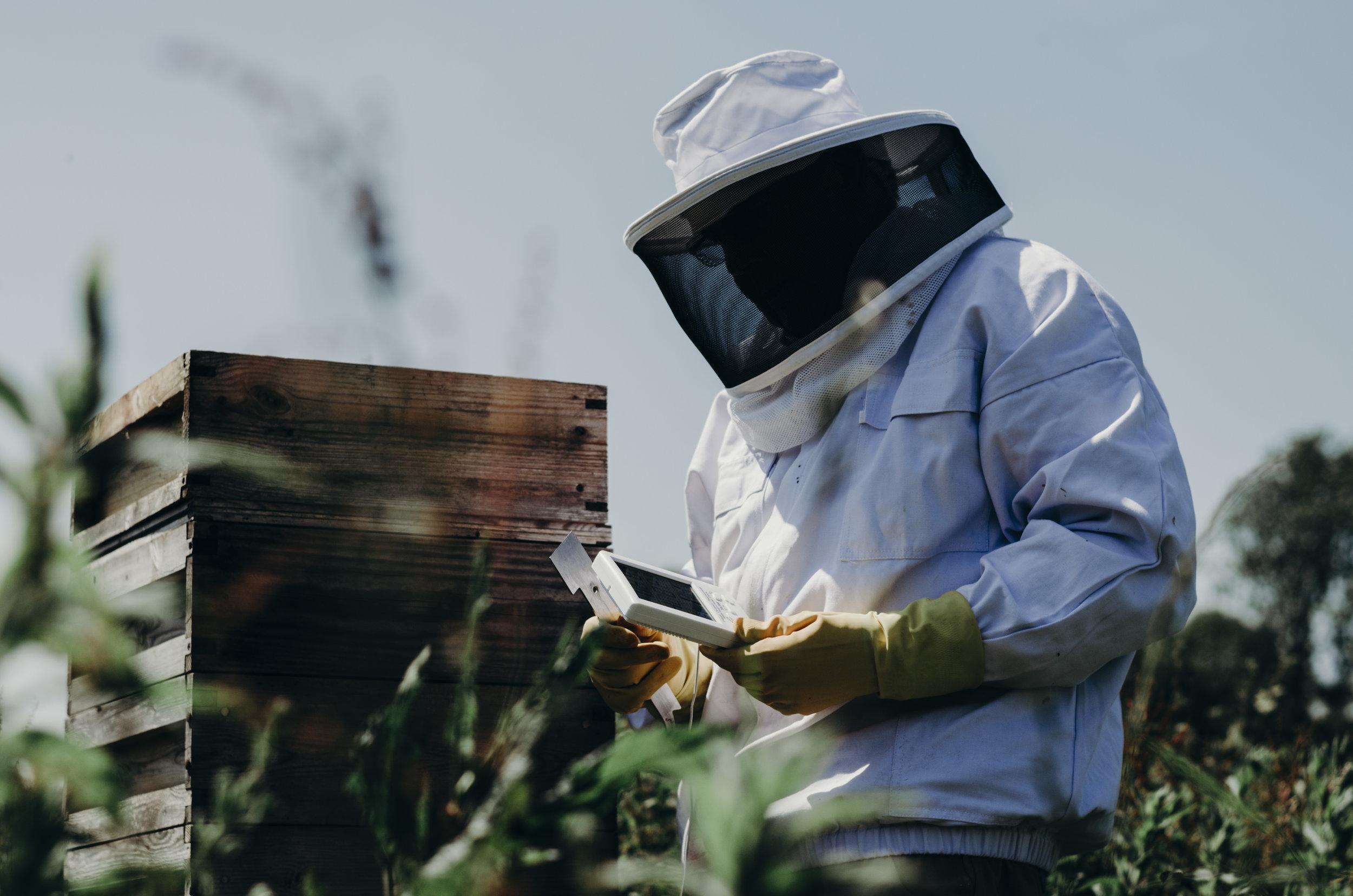 Beekeeping_20.JPG