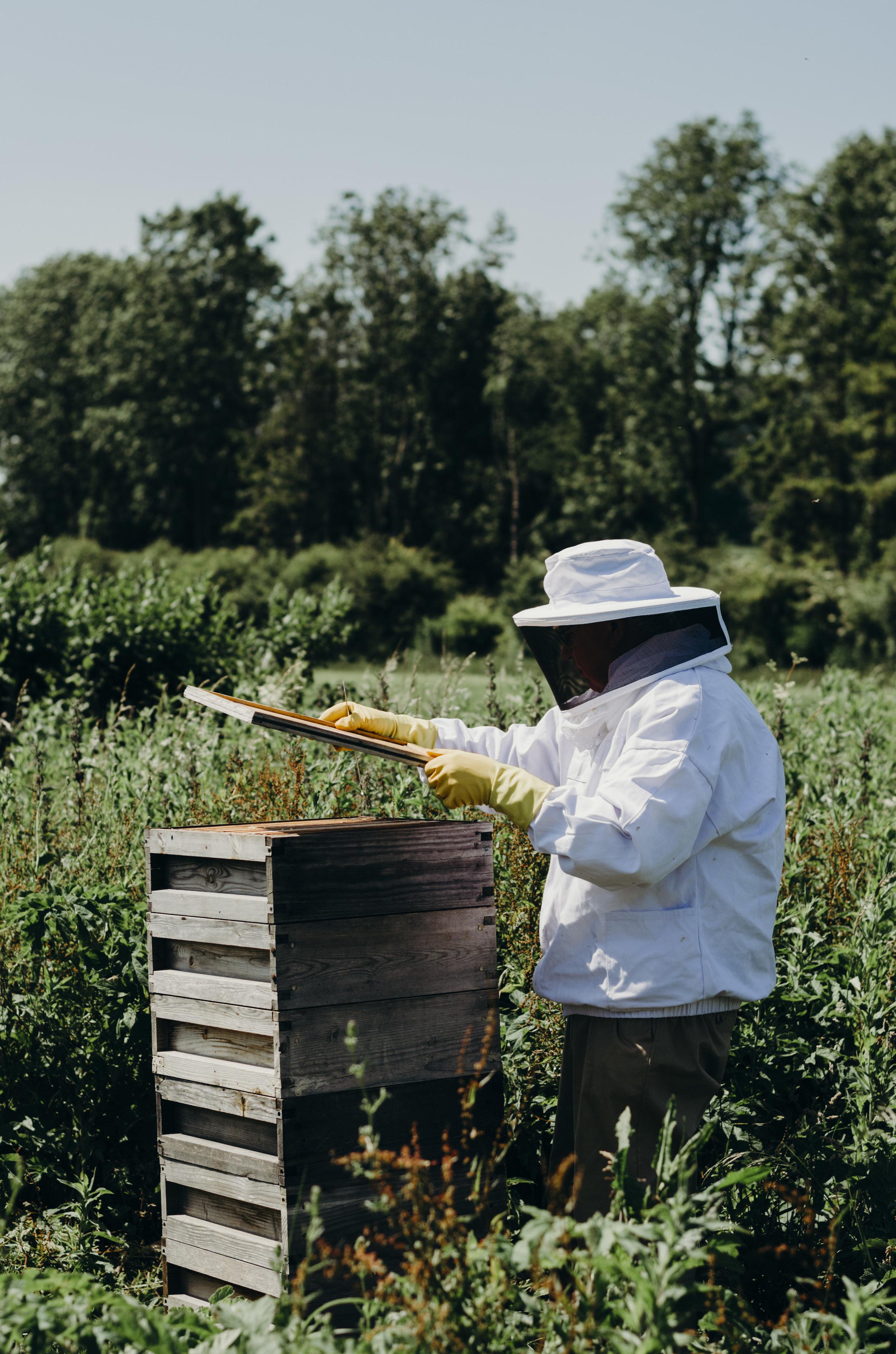 Beekeeping_29.JPG