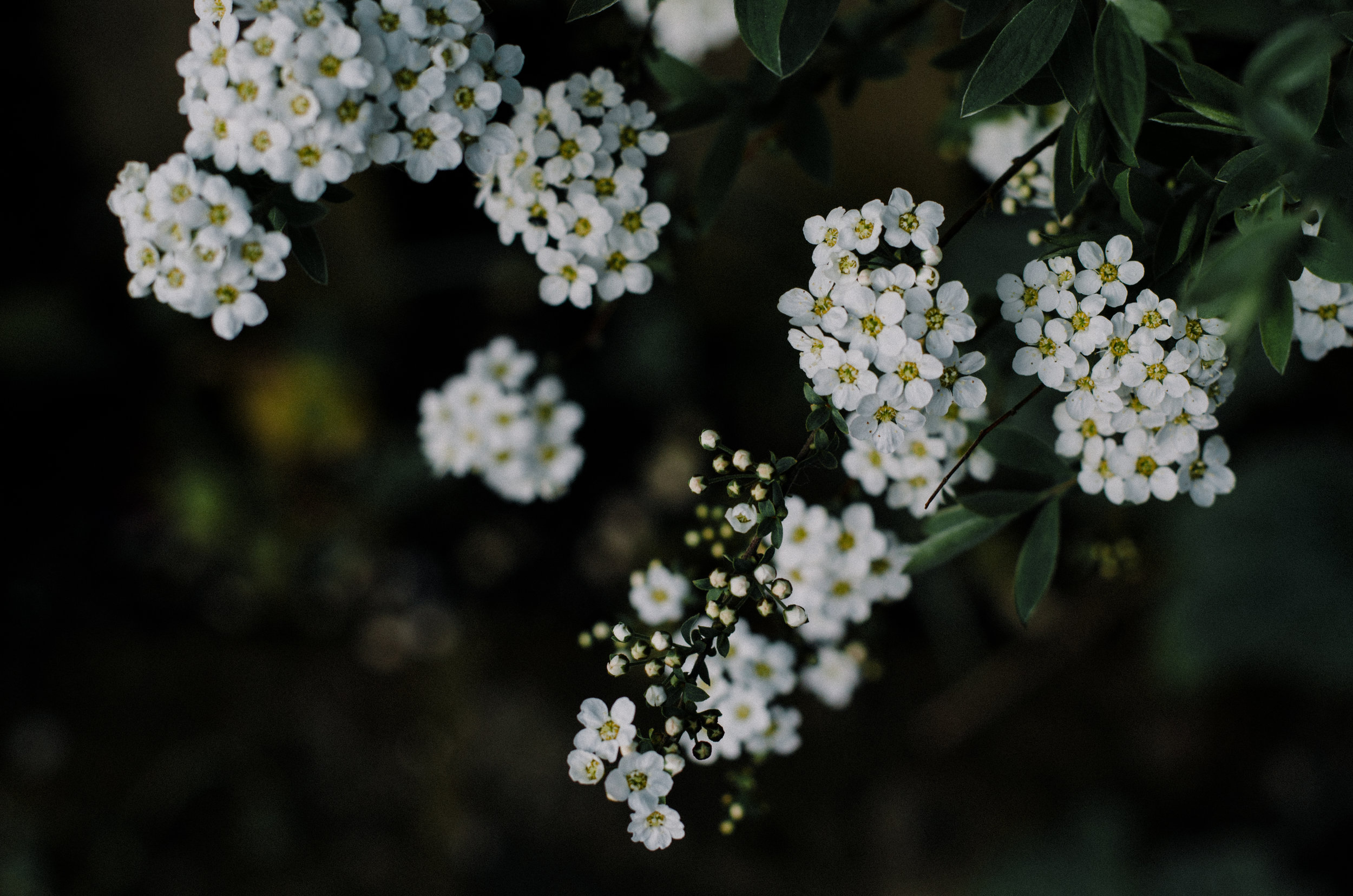Botanical Magic - Aiste Saulyte Photography-6.jpg