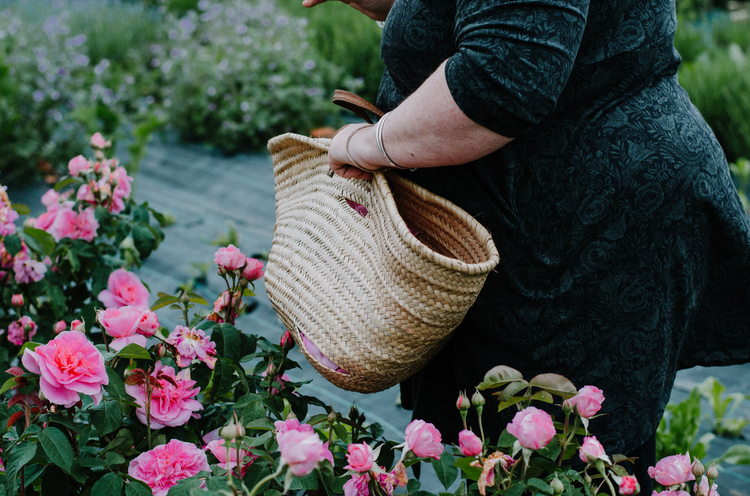 Fierce Botanics - Rose Picking - Aiste Saulyte Photography-40.jpg