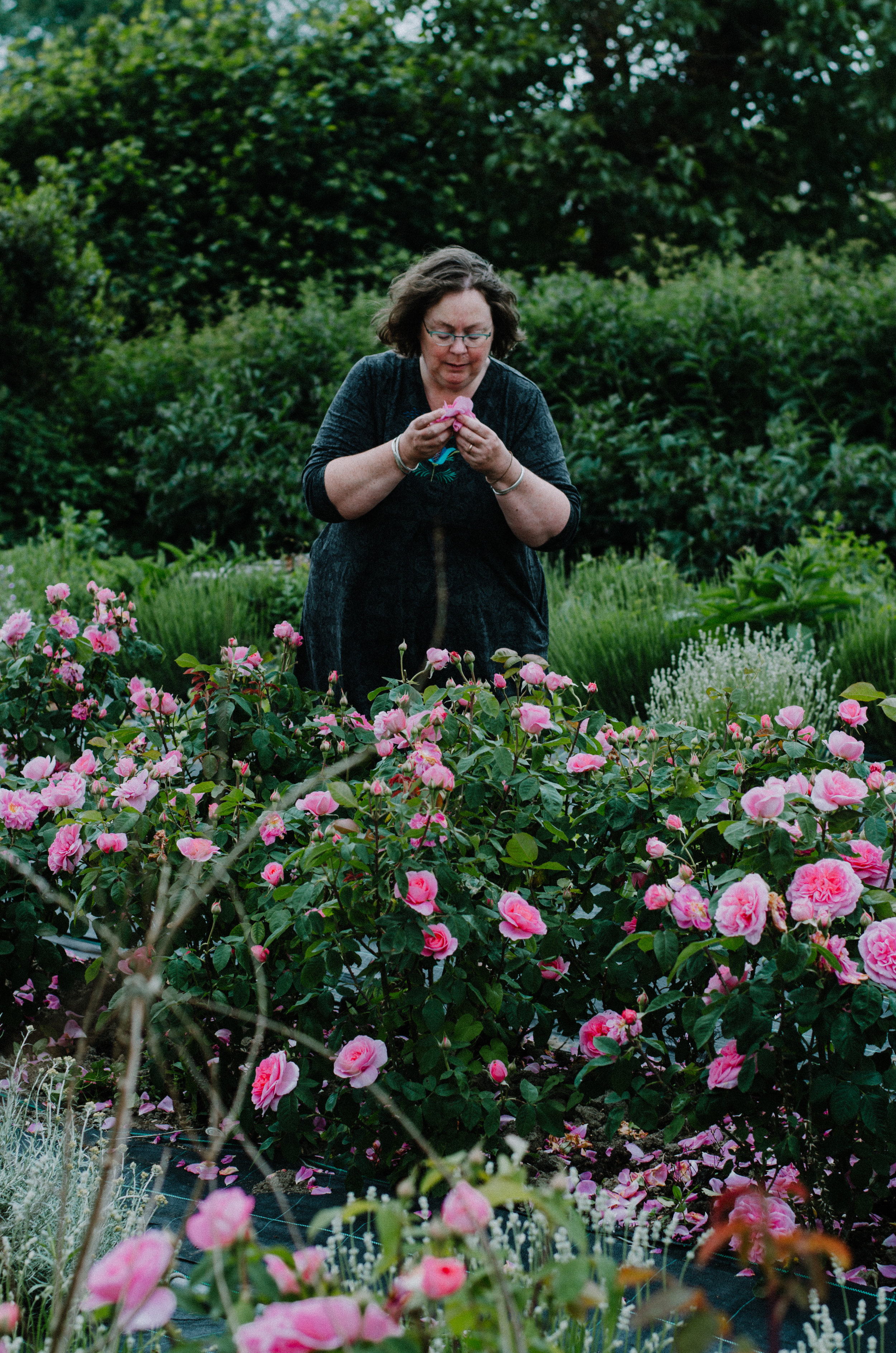 Fierce Botanics - Rose Picking - Aiste Saulyte Photography-47.jpg
