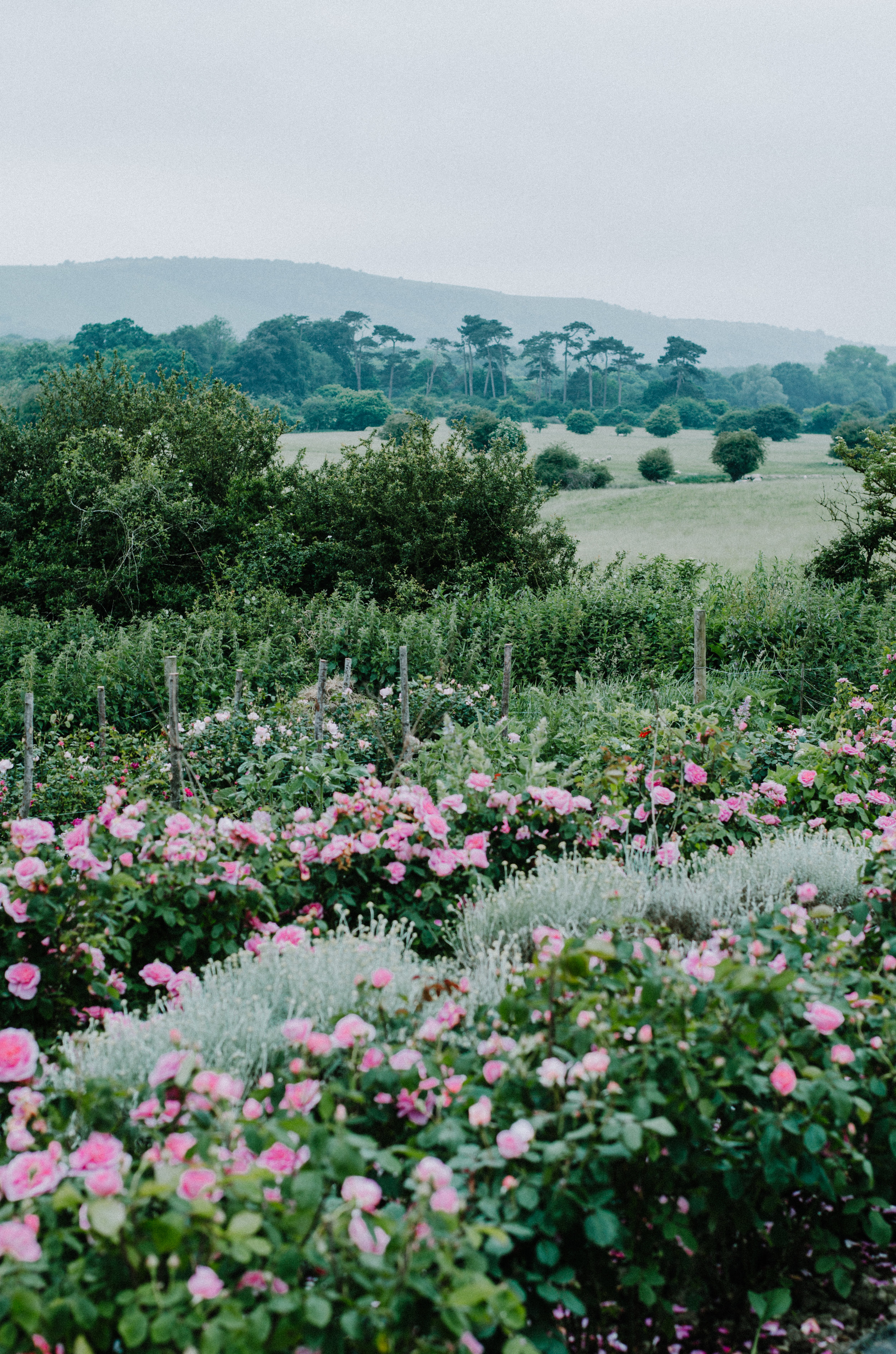 Fierce Botanics - Rose Picking - Aiste Saulyte Photography-54.jpg