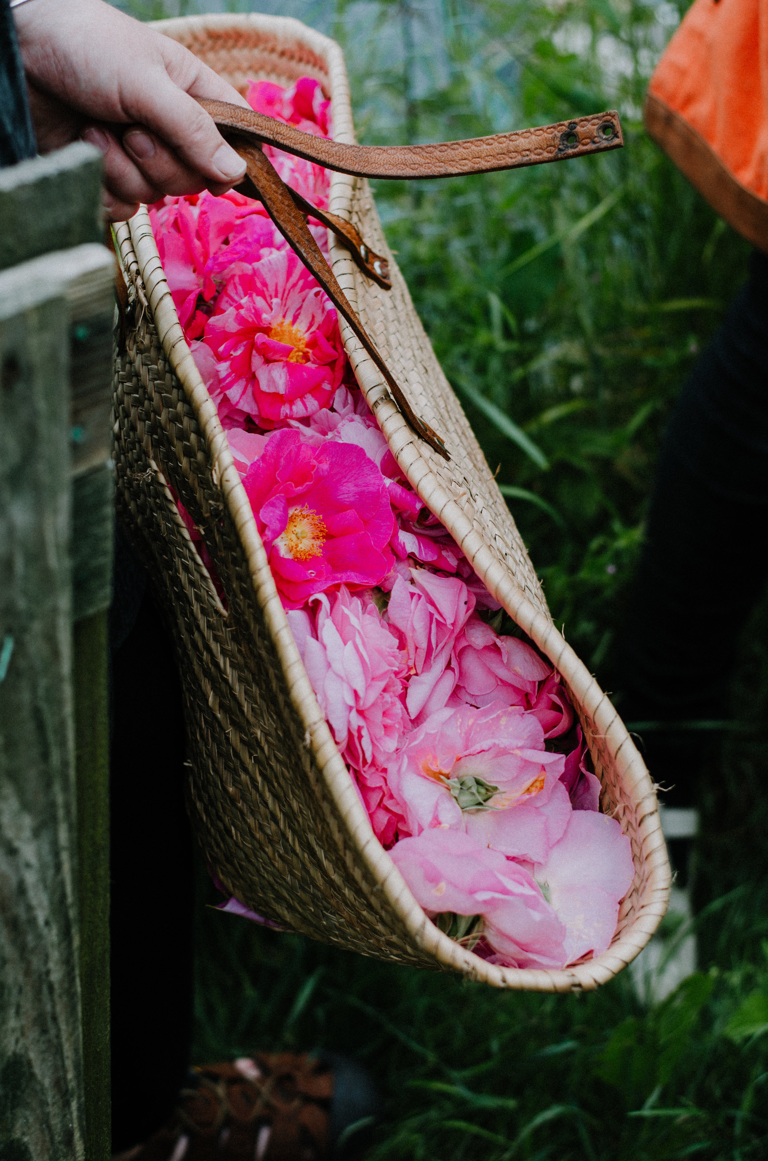 Fierce Botanics - Rose Picking - Aiste Saulyte Photography-120.jpg