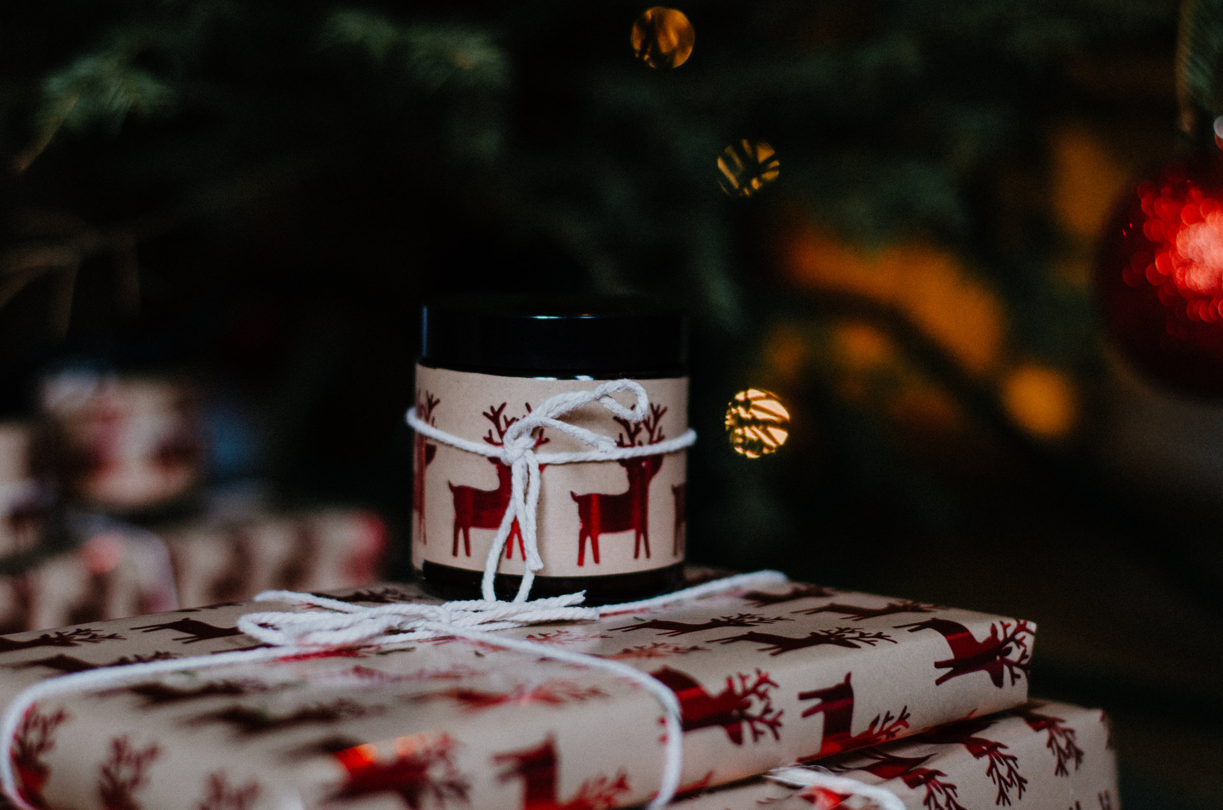 December Nature 2018 - Aiste Saulyte Photography-64.jpg