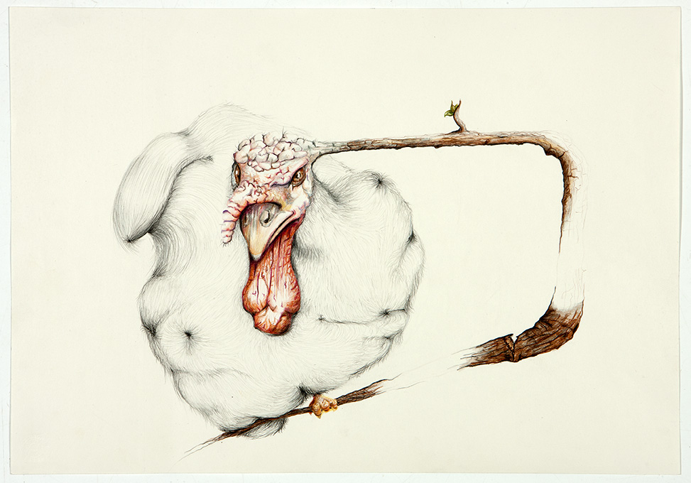 untitled, 2012, 35x50 cm, colour pencil on paper