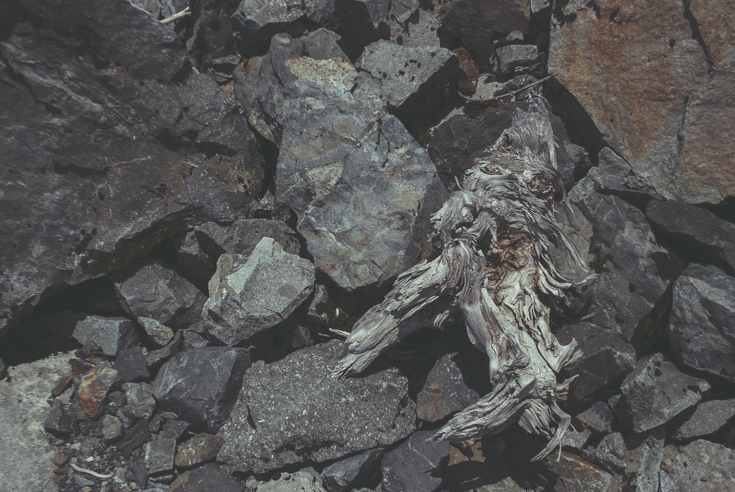 Seattle_lakeSerene_rocks_driftwood_DSC0258.jpg