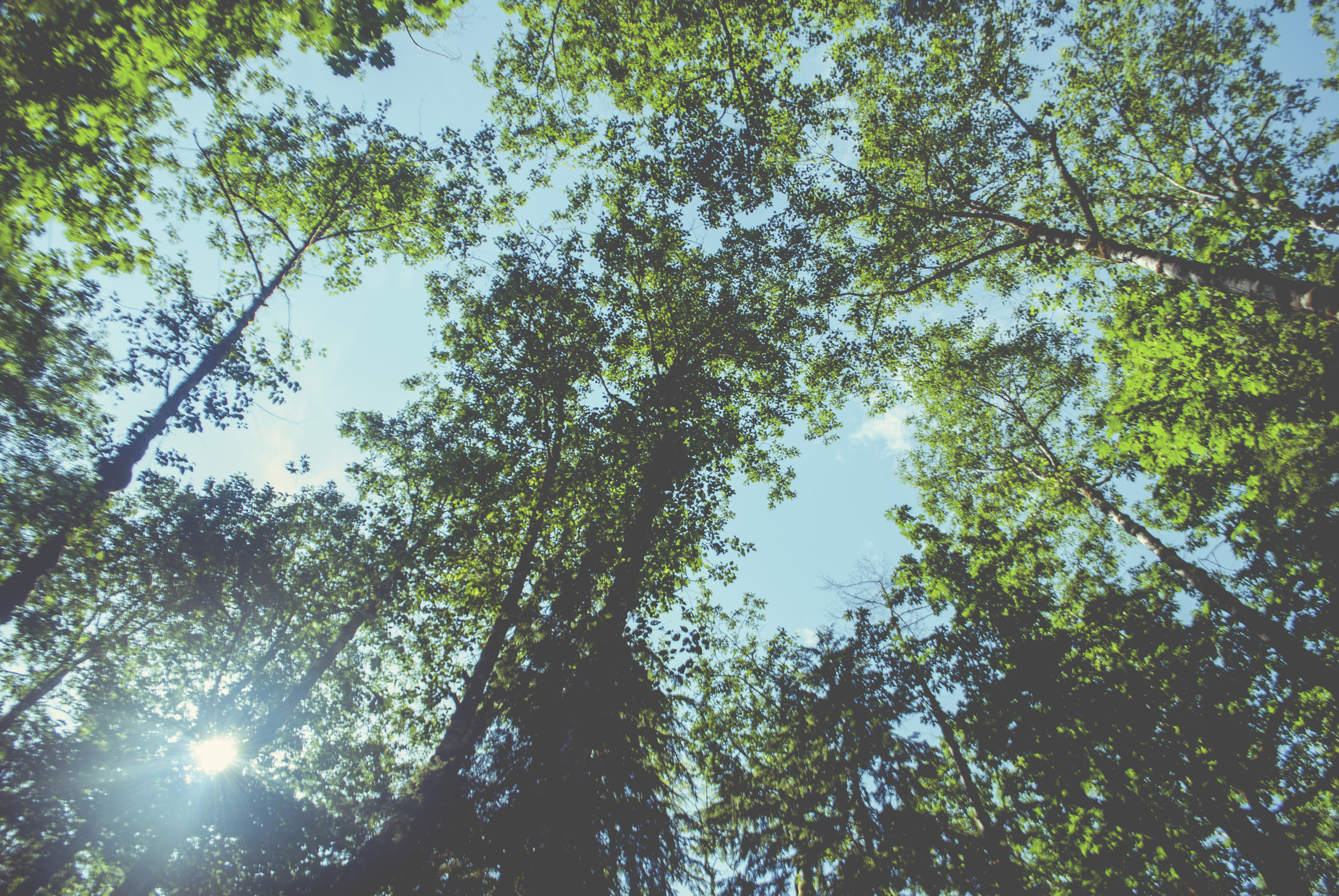 Seattle_trees_looking_up_0307.jpg