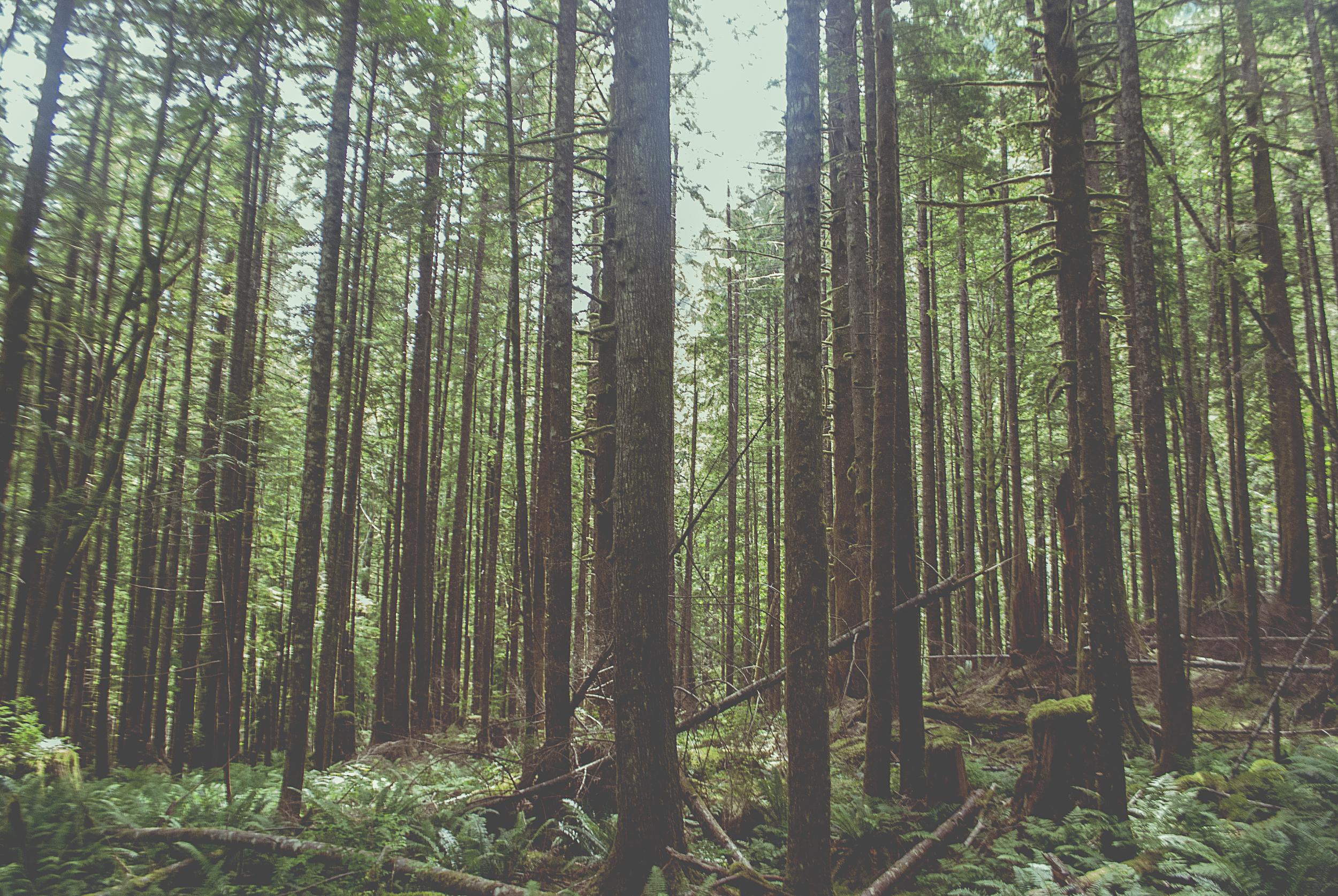 Seattle_vertical_lines_trees_2_DSC0119.jpg