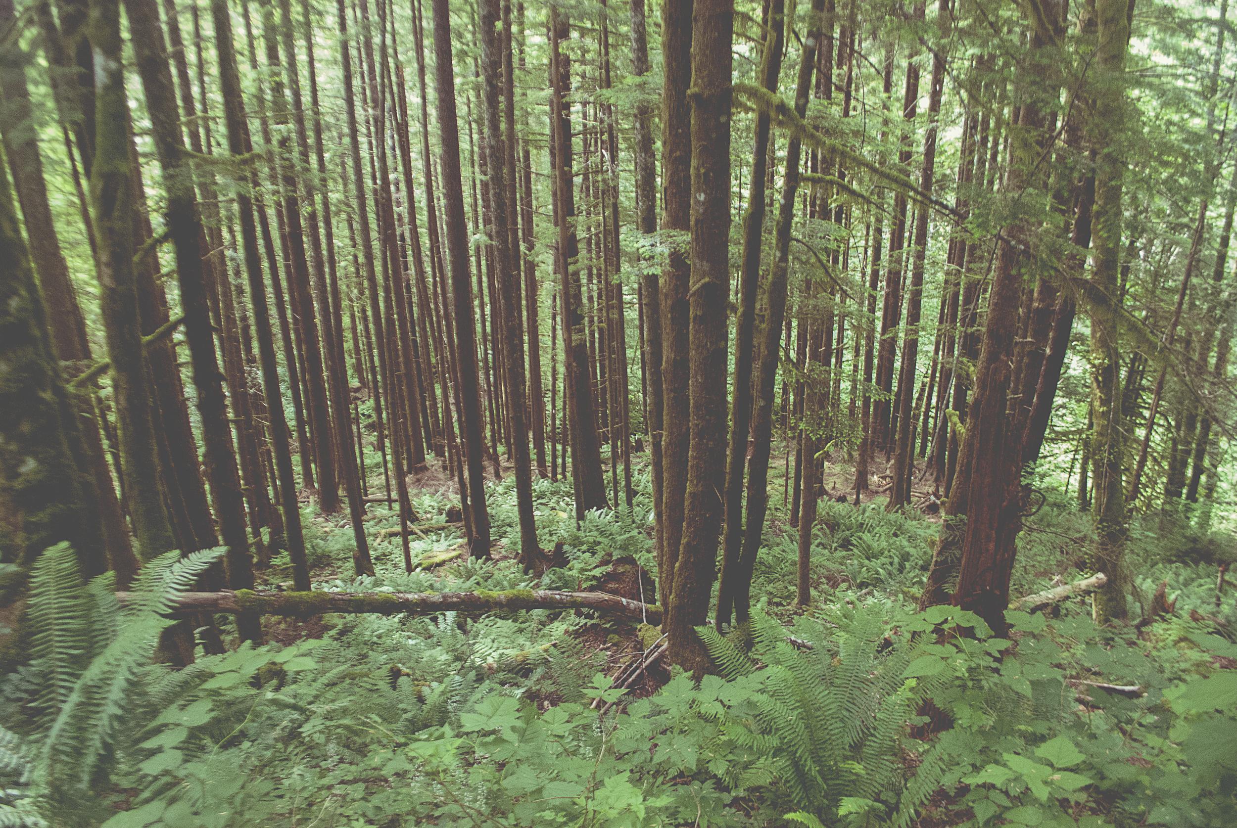 Seattle_vertical_lines_trees_DSC0033.jpg