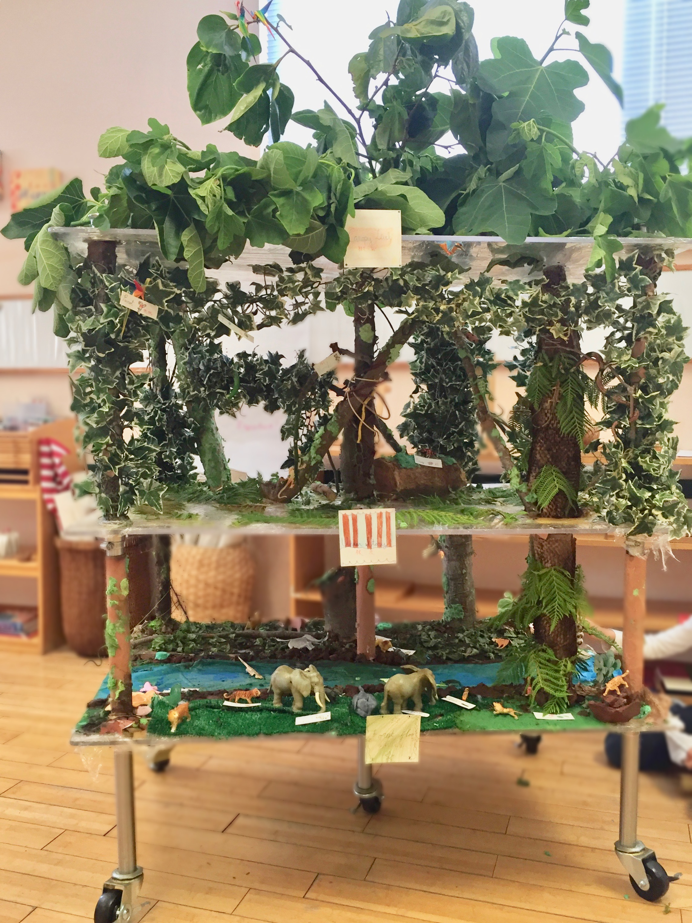 The entire class worked together to create this huge diorama showing the layers of the rainforest—complete with a living canopy and a translucent river flowing through the forest floor.