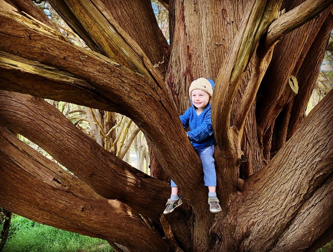 big climbing tree