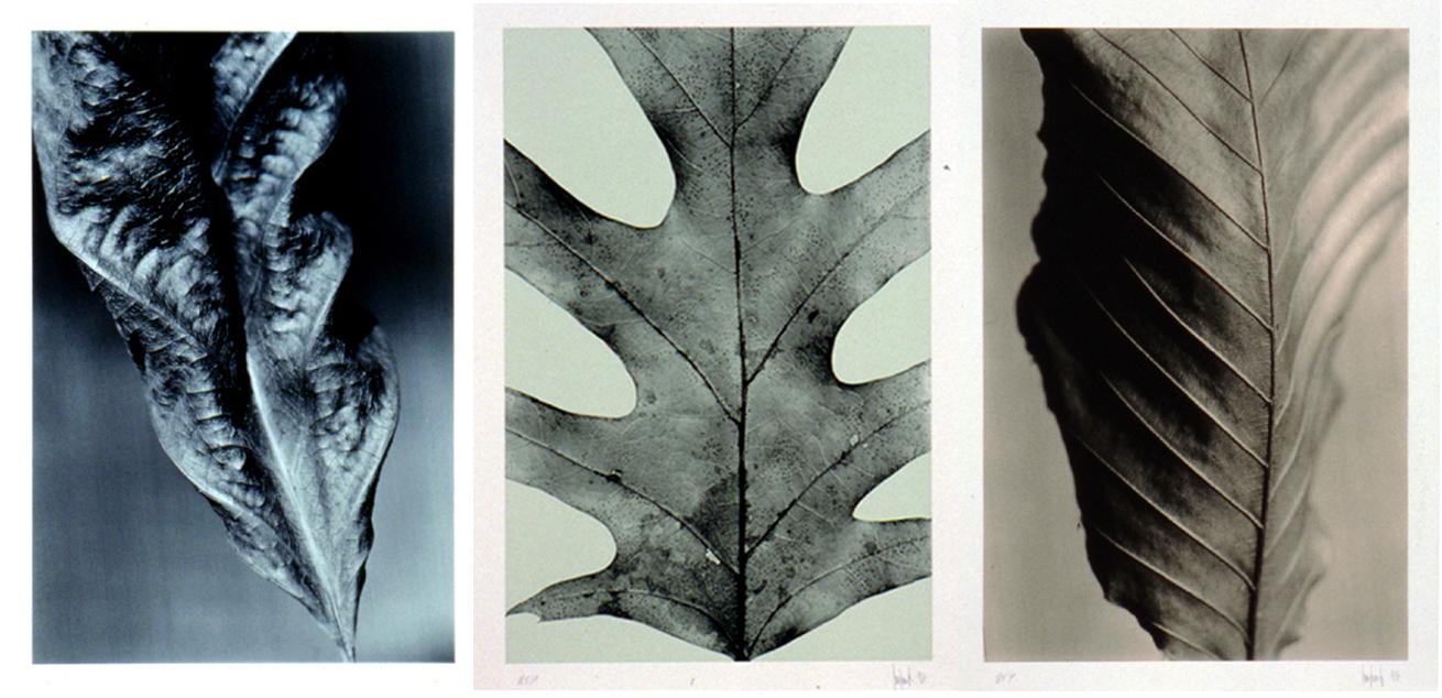 Cuttalossa Suite (Portfolio of 3 prints)