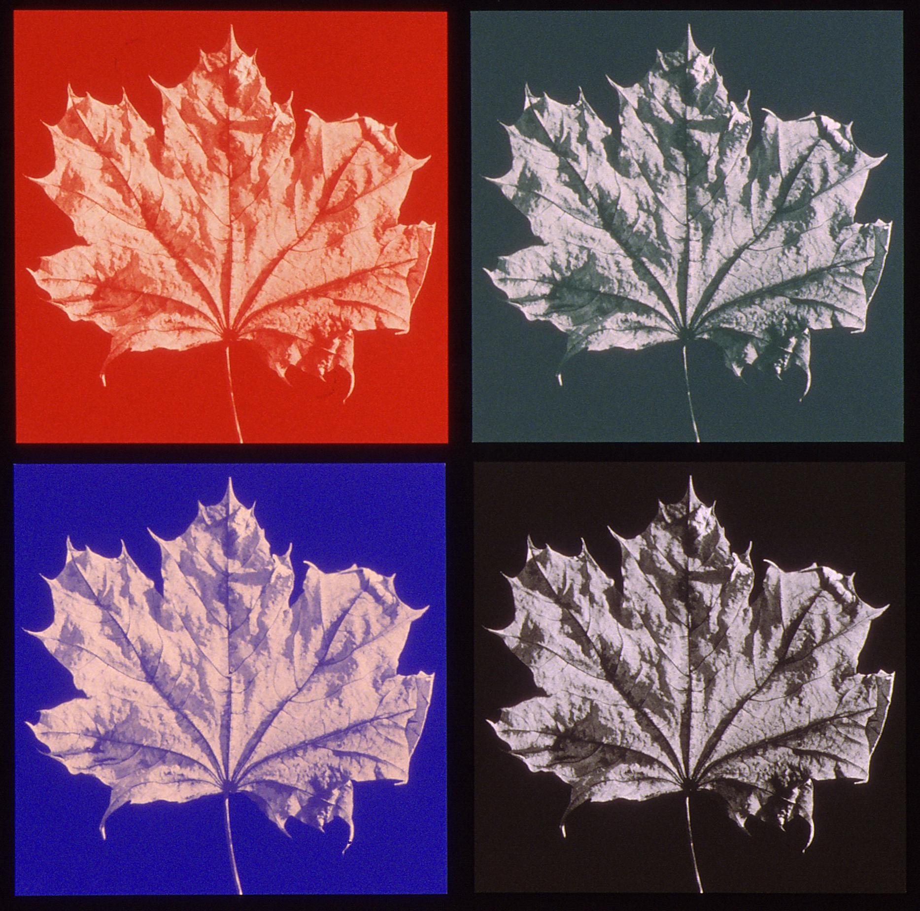 Maple Leaf Prints-Green