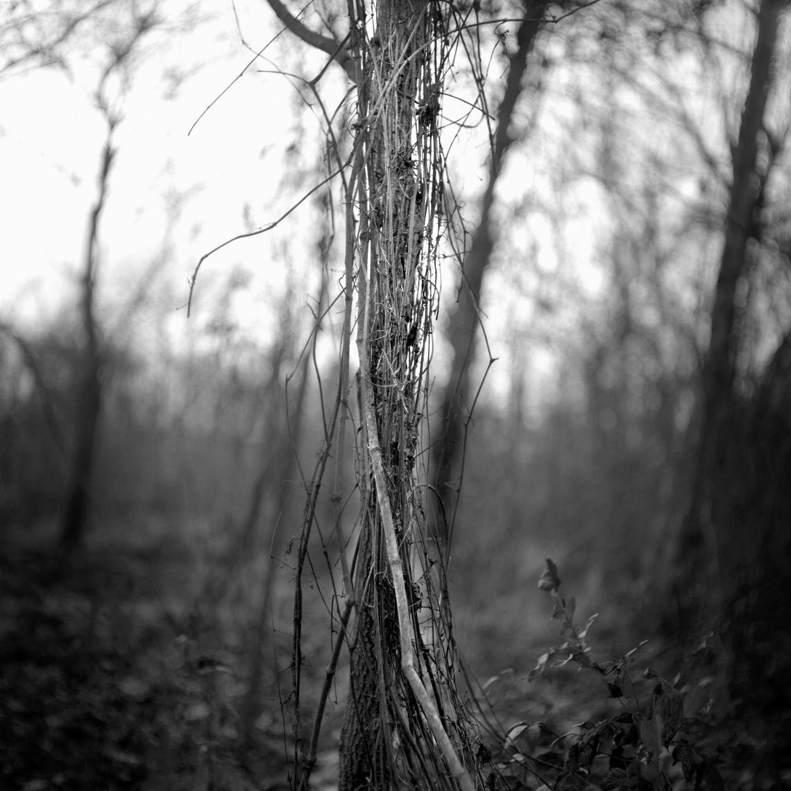 Pecan Grove, BoBo, MS 2010