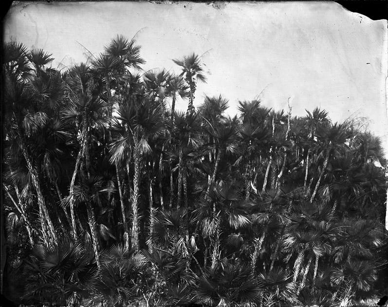 Paurotis Palms, 2010
