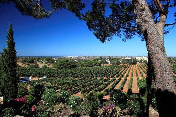 Adega do Cantor Winery