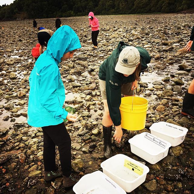 Sorting crabs #fundynationalpark