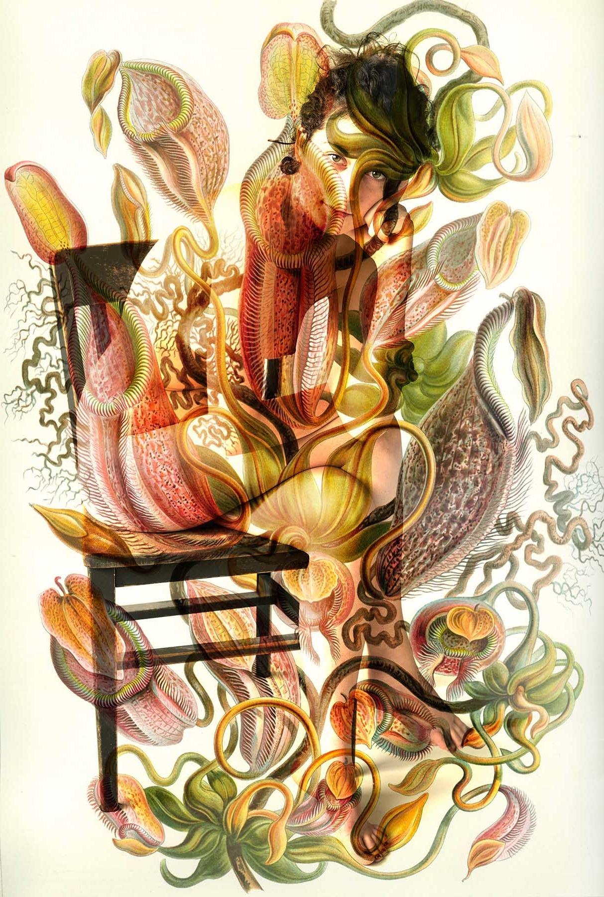 """Nepenthes Melamphora"" illustration by Ernst Haeckel 1899"