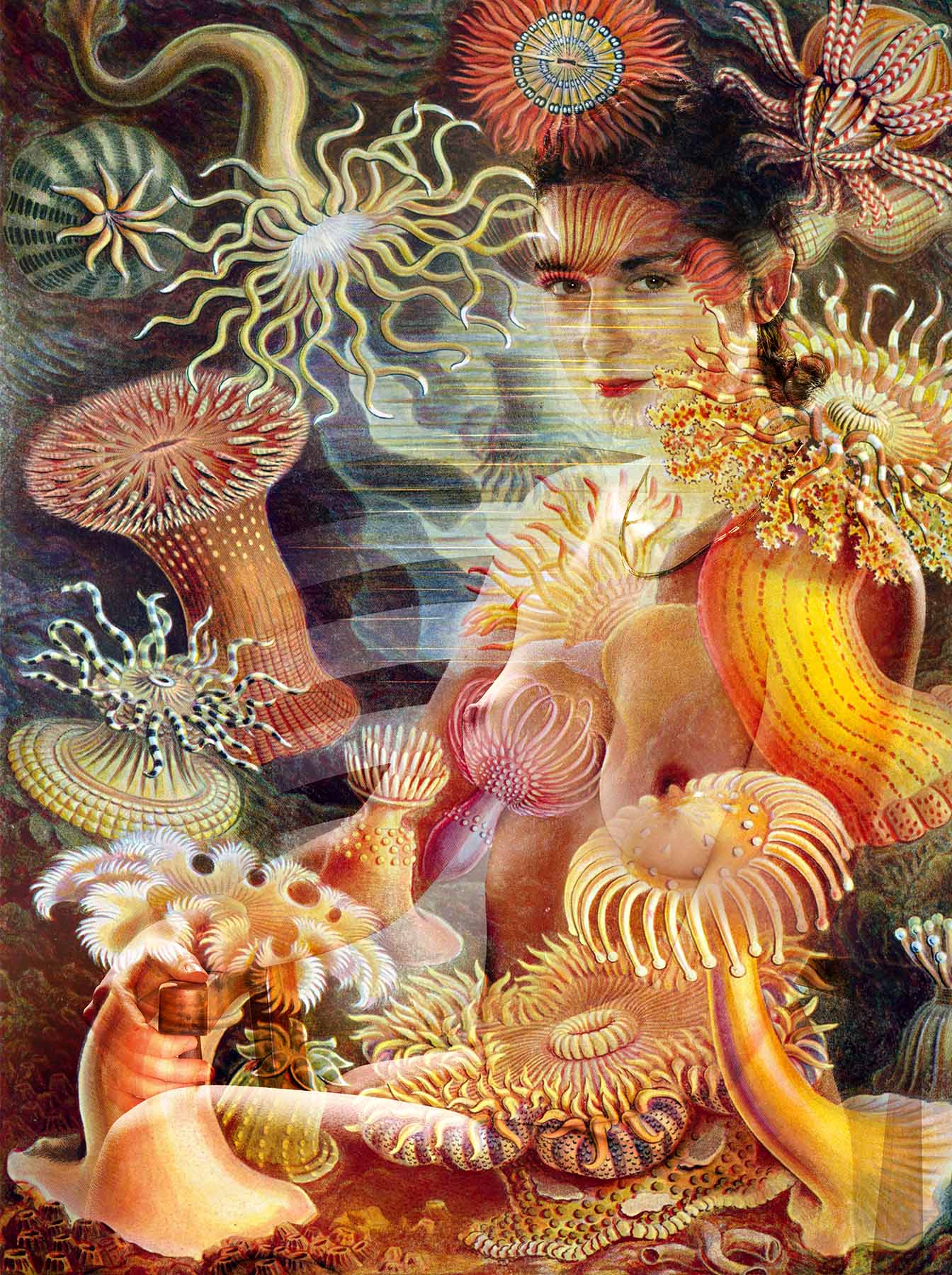 "Photoand collage by Matt Clysdale.Sea anemone illustrationfrom Ernst Haeckel's ""Kunstformen der Natur (Art Forms of Nature) of 1904"
