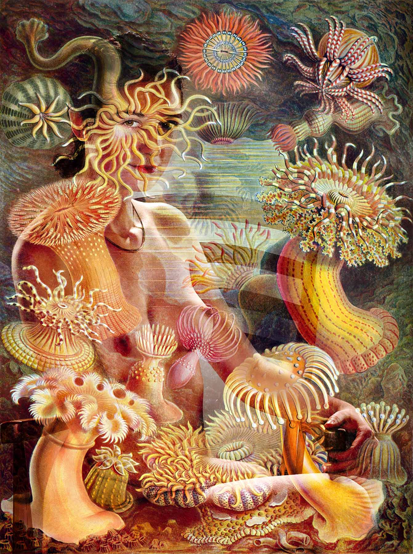 """Photo and collage   by Matt Clysdale.  Sea anemone illustration  from Ernst Haeckel's """"Kunstformen der Natur (Art Forms of Nature) of 1904"""