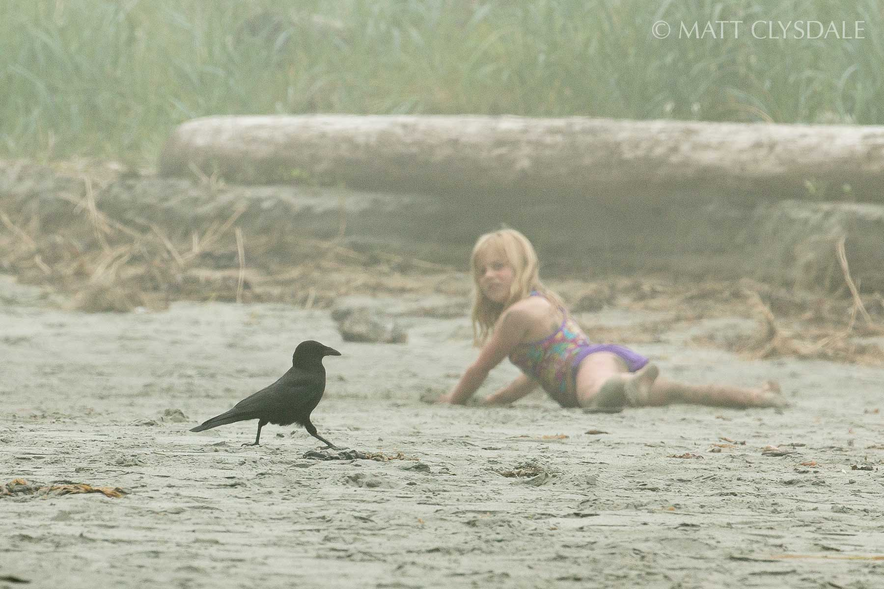 Close Encounter with Crow - Crescent Bay