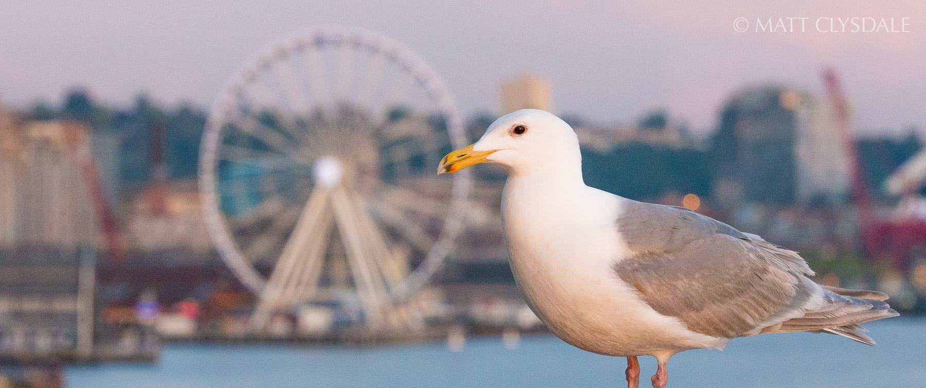 Seattle Seagull