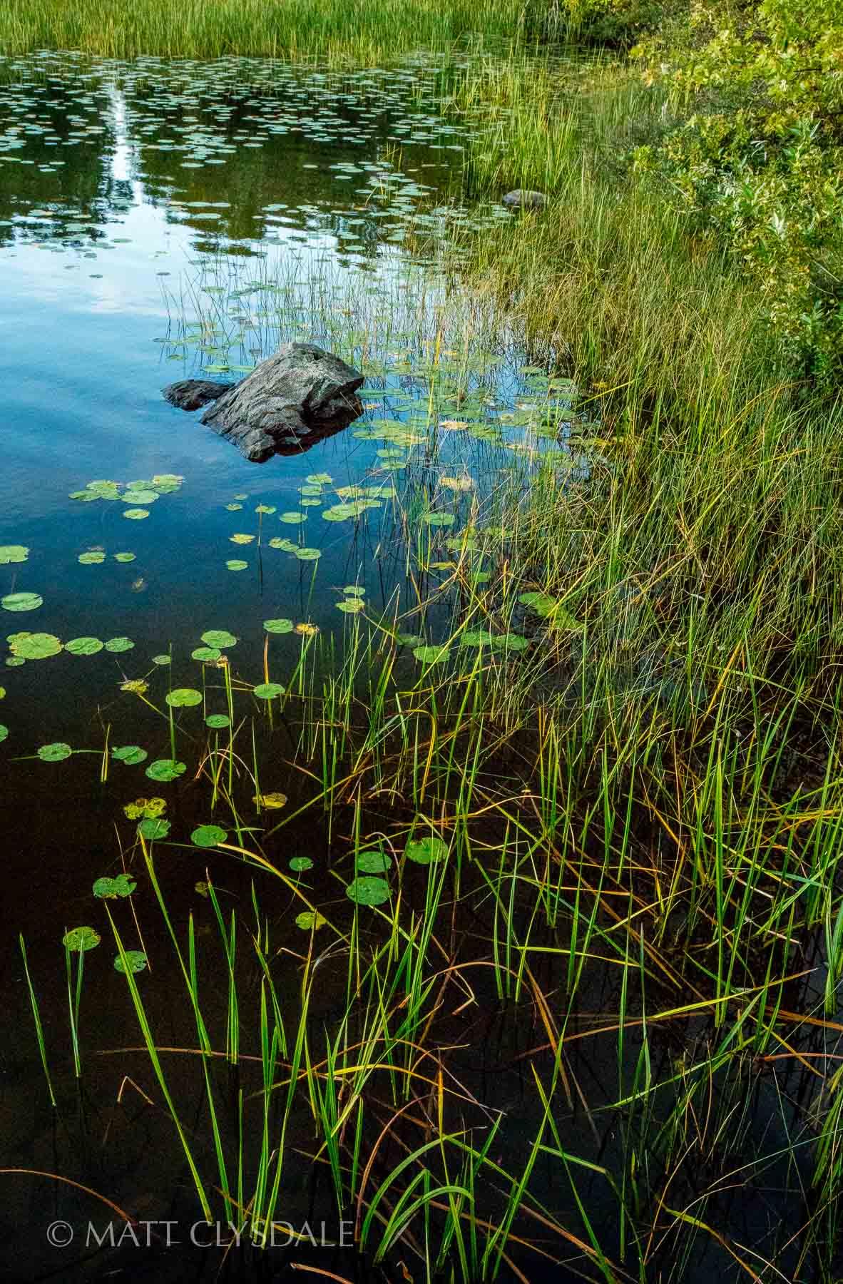 The Lily Pads and the Rock - Shagawa Lake