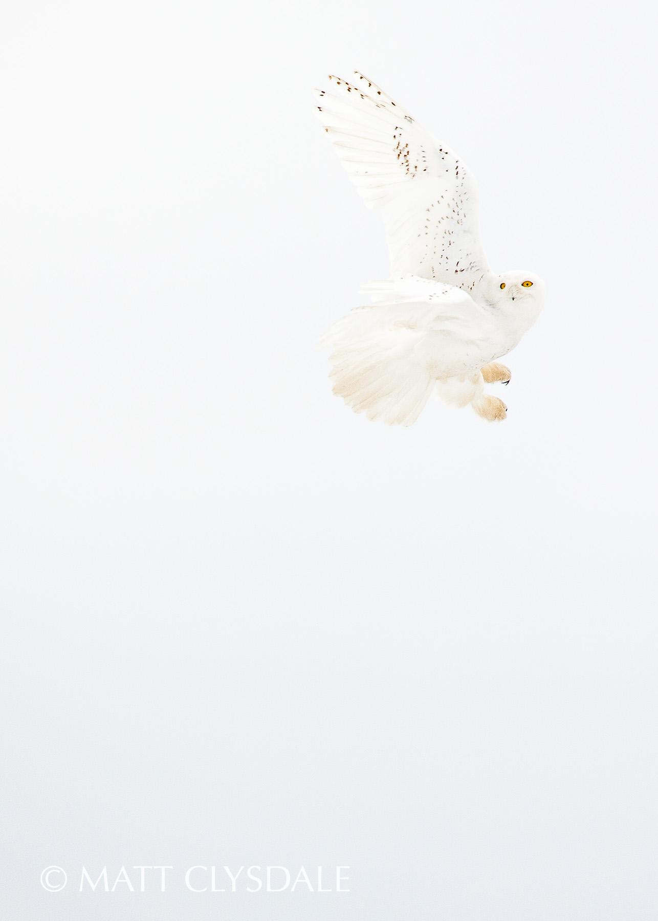 SnowyBanking(namestamp).jpg