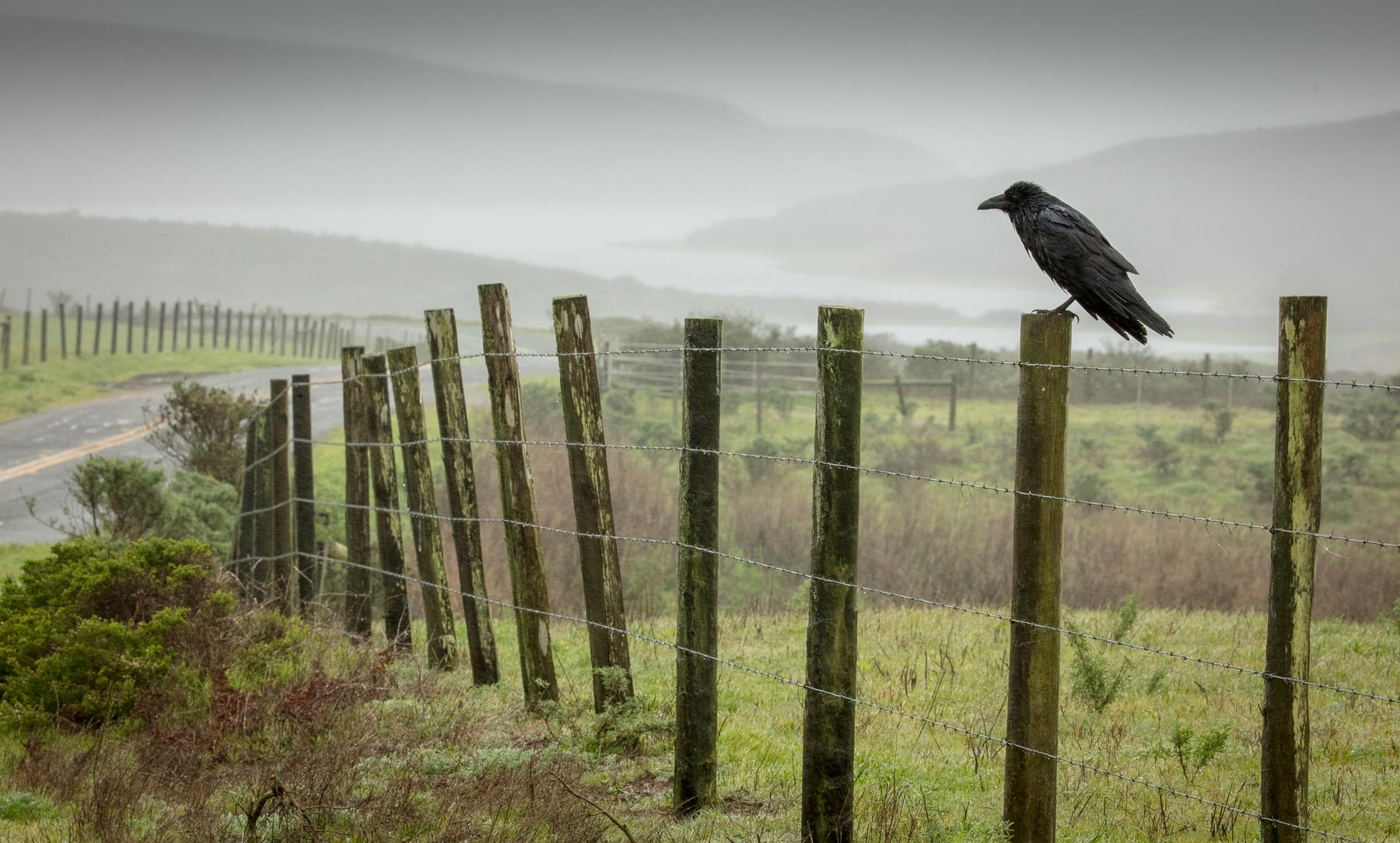 Raven and Landscape