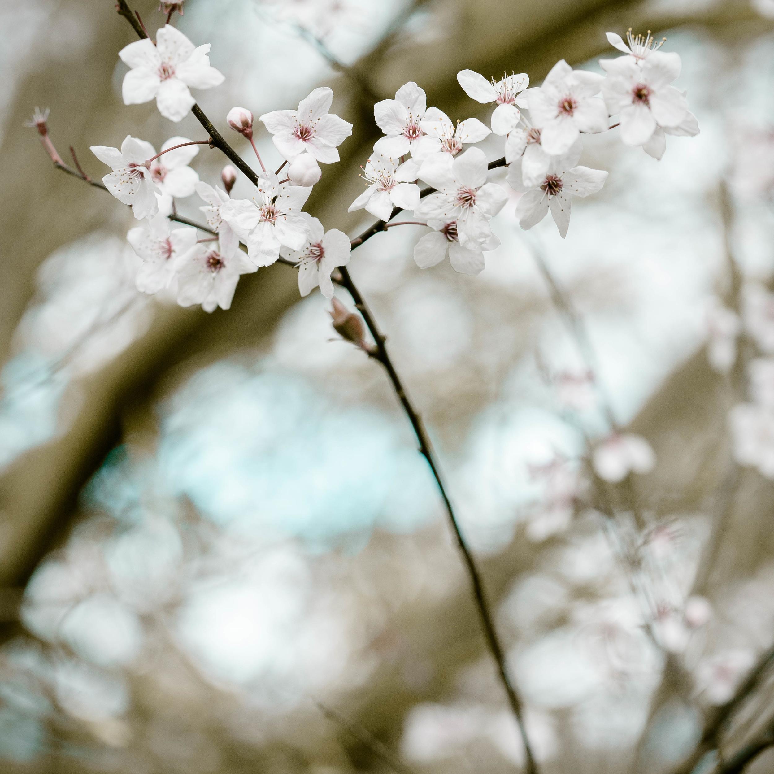 Tassie Spring_060912_0513blossoms.jpg