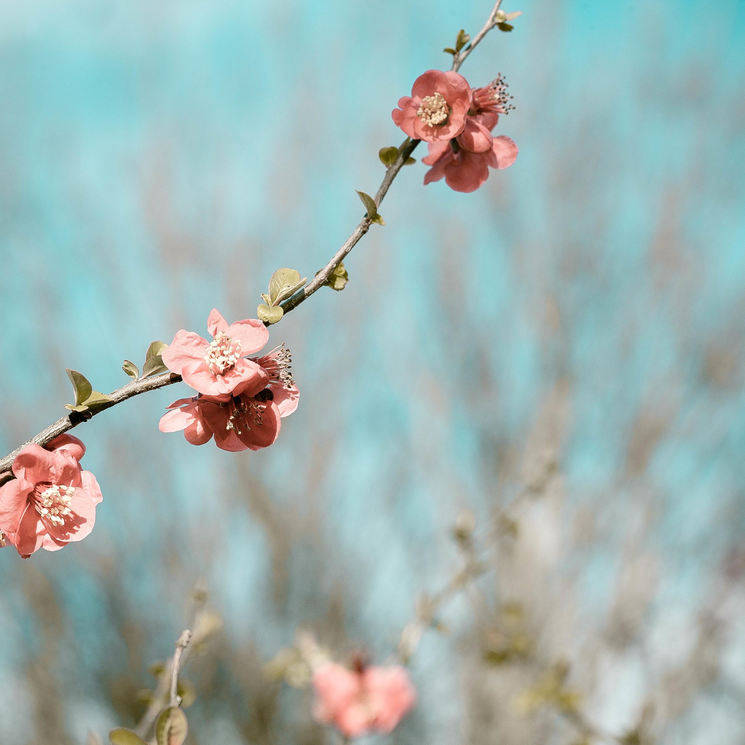 Tassie Spring_070912_0368blossoms.jpg