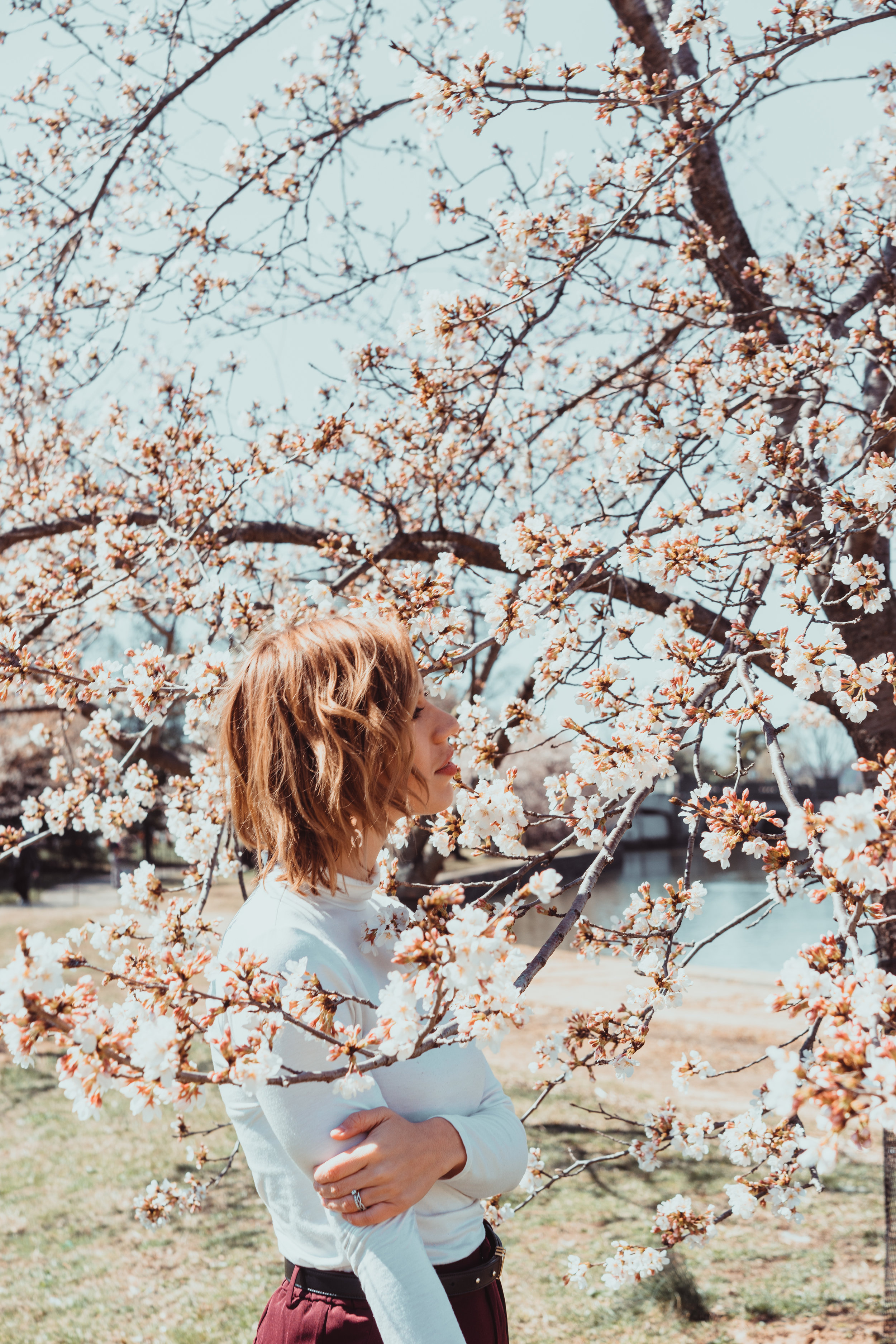 dc-cherry-blossoms
