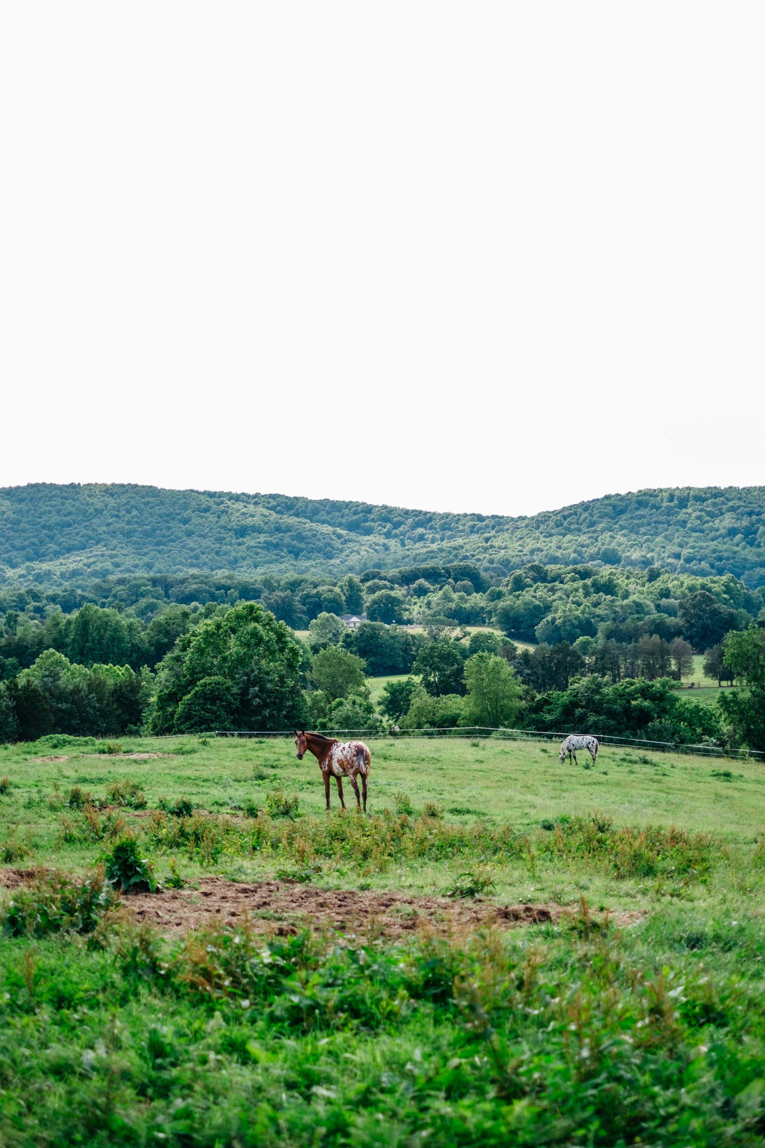 virginia-countryside
