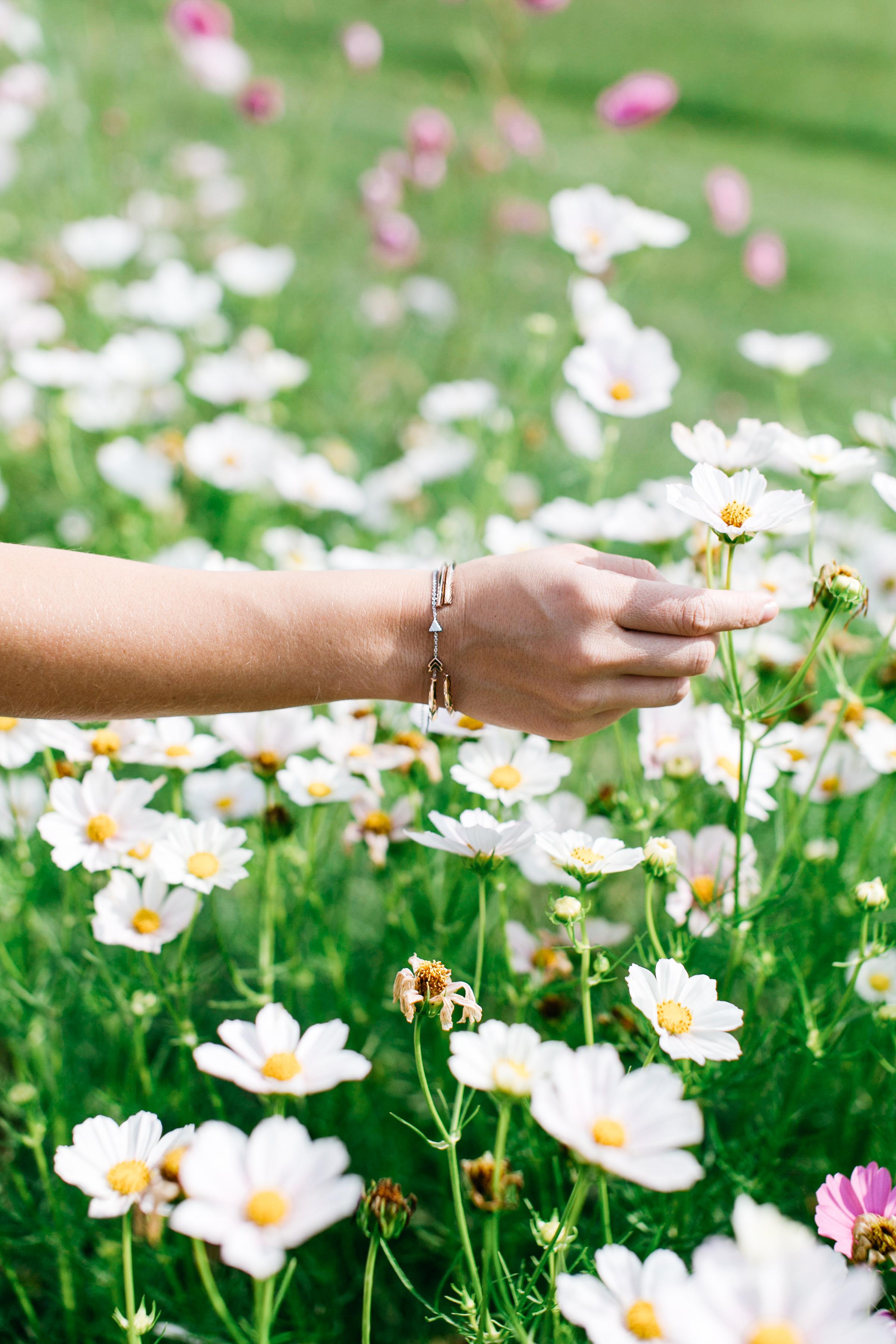 flower field va