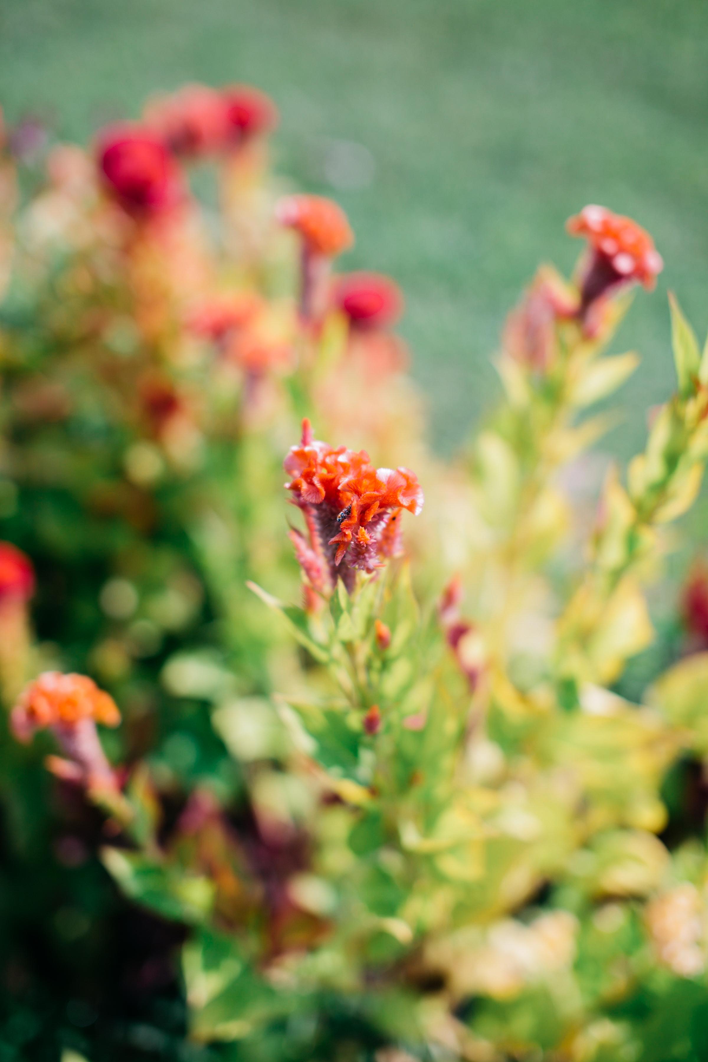 field of flowers near me