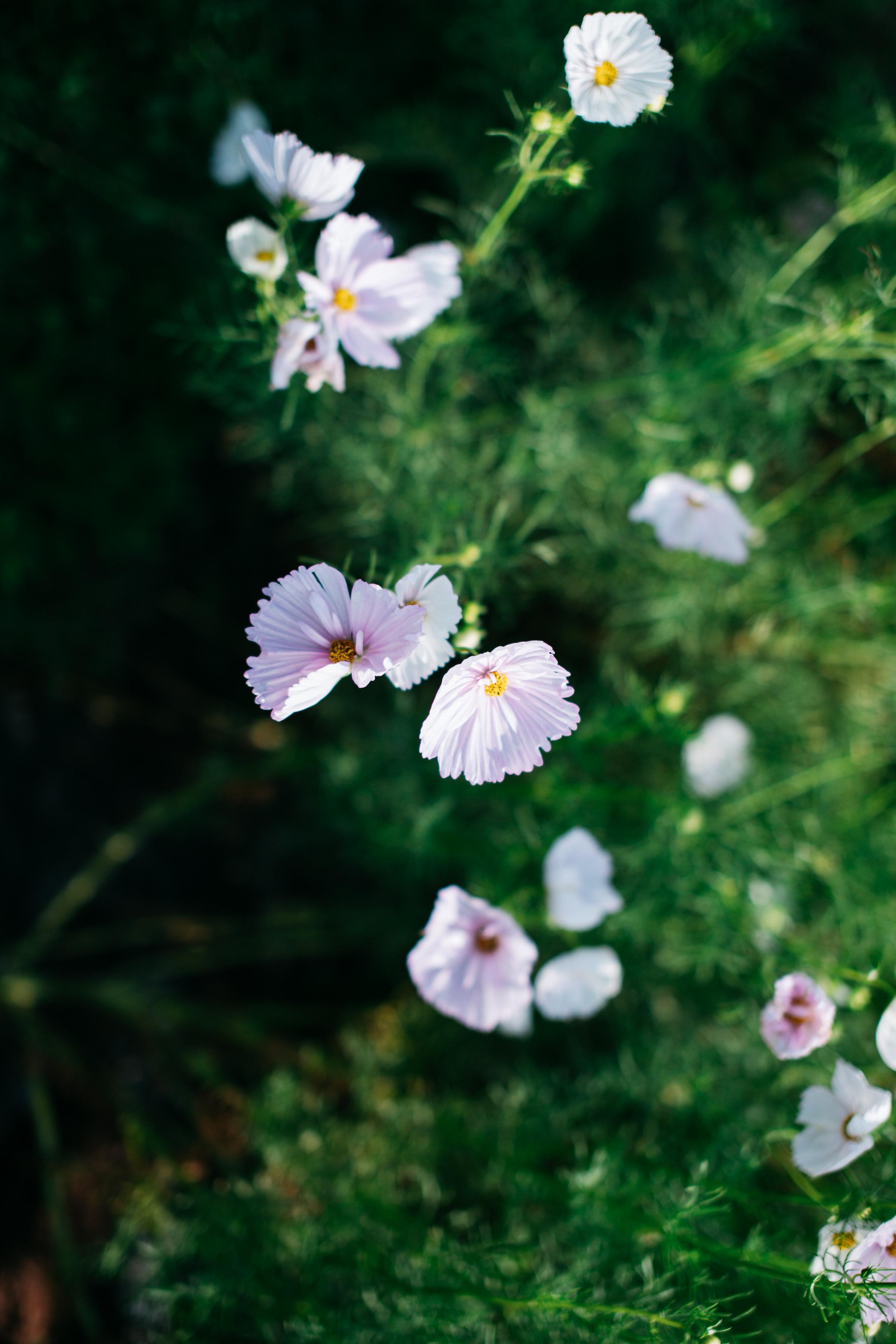 field of flowers purcellville
