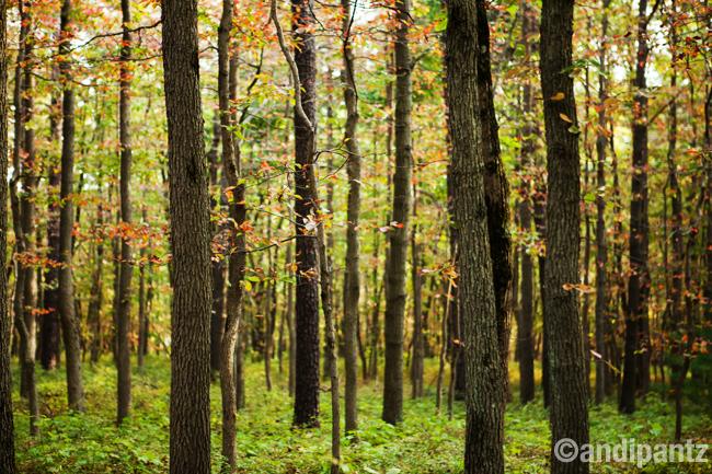 pinegrove2.jpg