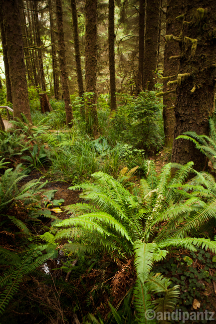 redwoods2.jpg