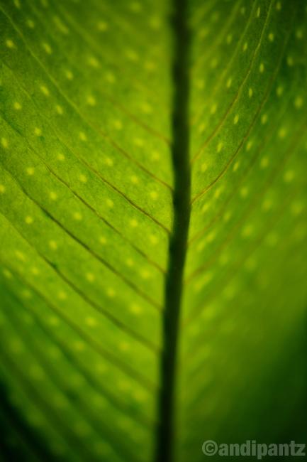 leafdetail.jpg