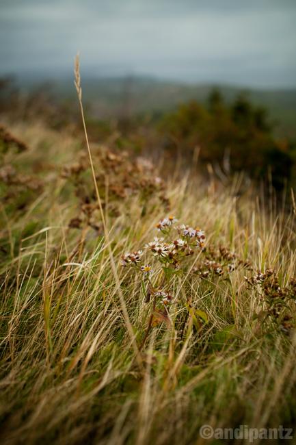 cadillacplants1.jpg