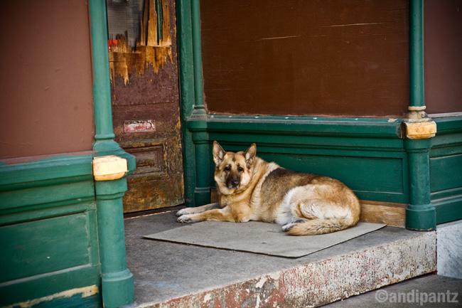 porchdog.jpg