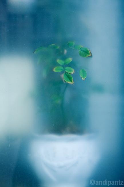 foggedflower.jpg