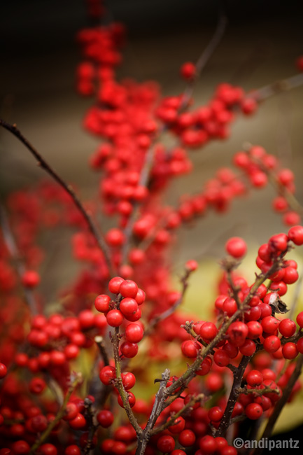 winterberry3.jpg